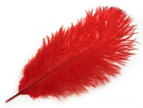 strusie pióro 20-25 cm czerwone