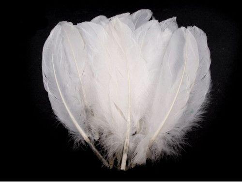 pióra gęsie 15-21 cm. białe