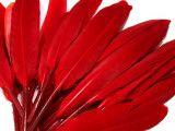 pióra kacze 9-14 cm opak.20 sztuk czerwone
