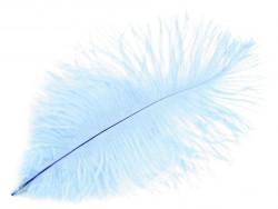 strusie pióro 20-25 cm błękitne