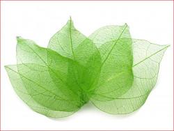 liście do dekoracji zielone